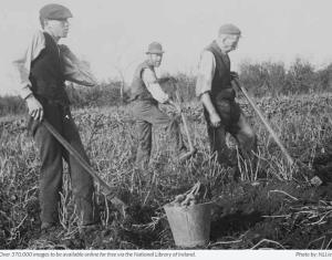 Irish farm workers from NLI